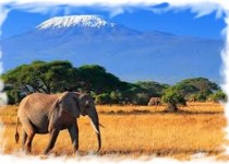 Кения 4