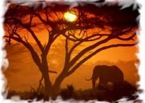 Кения 3